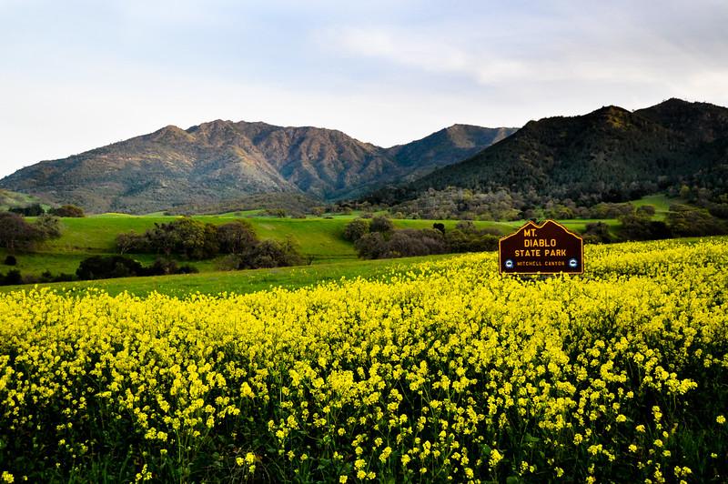 Mt. Diablo springtime