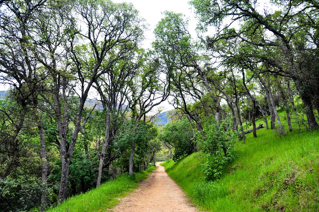 Mt. Diablo trail