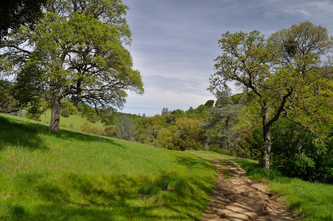 Springtime on Mt. Diablo