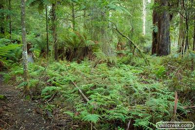 creek-130615-033
