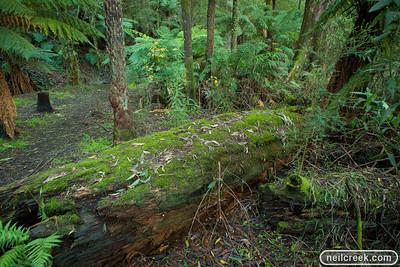 creek-130615-030