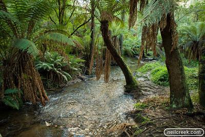 creek-130615-049
