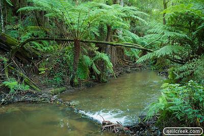creek-130615-027
