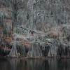 Shot through the Swamp
