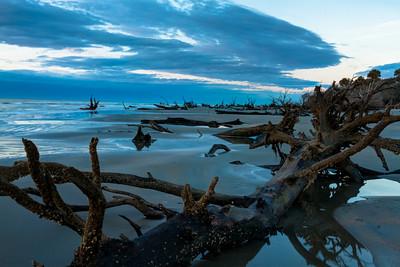 Boneyard Beach at Bull's Island