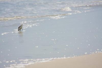 110821_Beach_13