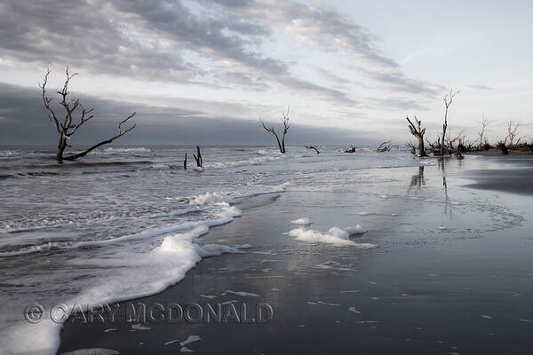 Boneyard Beach at Bull's Island