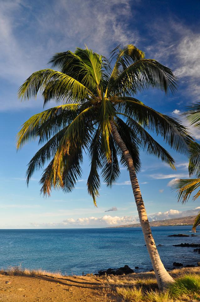 Lone Palm Tree, Big Island, Hawaii