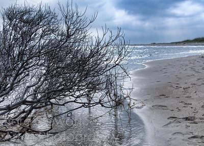 Beach Branch