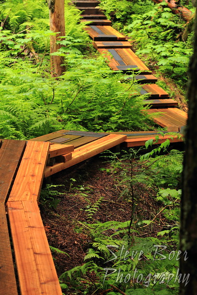 Ancient Forest Boardwalk
