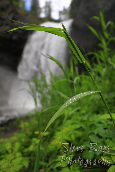 Grass by waterfall