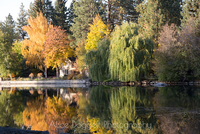 Colorful Autumn Leaves Reflecting In Mirror Pond, Bend, Oregon - 6