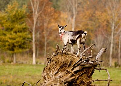 Bennington Vermont 10-15-2008