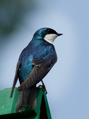 Berkshire Bird Sanctuary