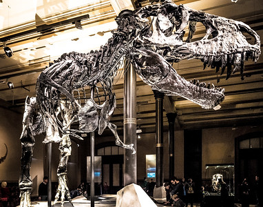 T-Rex named Tristan in Berlin Museum of Natural History