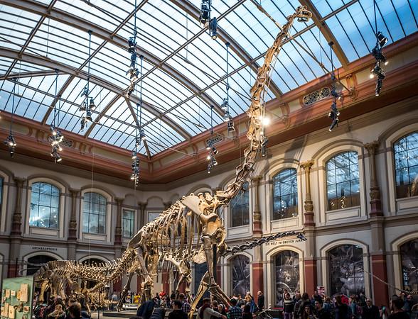 Giant dinosaur skeleton in Berlin Museum of Natural History