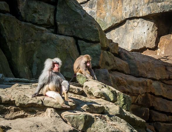 Chillin monkeys in Berlin Zoo