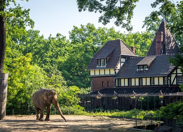 Elephant in Berlin Zoo