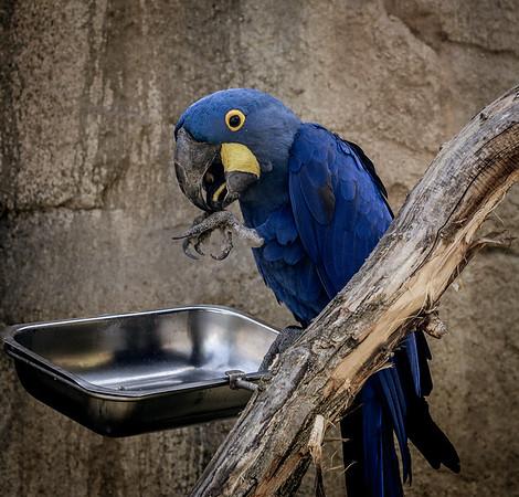 Parrot in Berlin Zoo