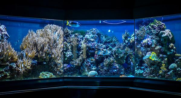 Aquarium in Berlin Zoo