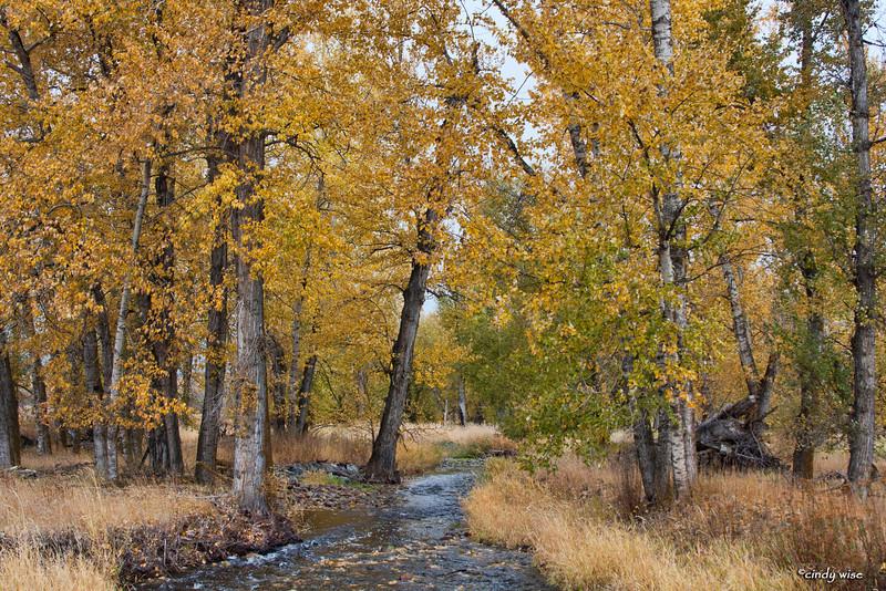fall creek @ stevensville