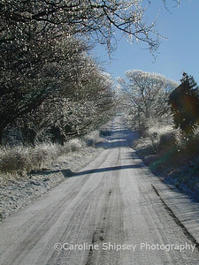 Two Trees, road in winter