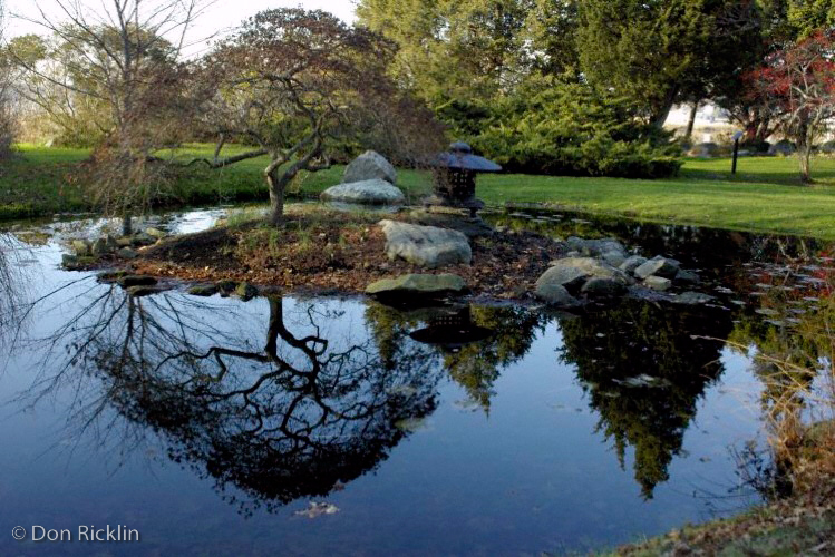 Clear reflection, oriental pond, Blithewold Arboretum, Bristol, RI