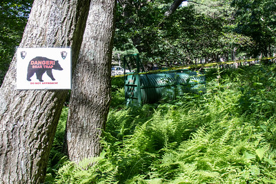 Another side of bears.  This trap was on one of the paths by the lodge.