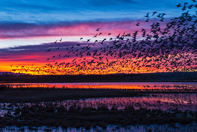 Bosque Del Apache National Wildlife Refuge, NM