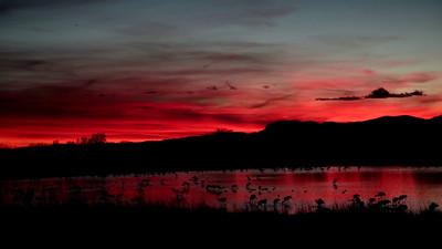Sandhill Roosting Sunset