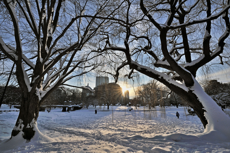 Boston Common Tree Arch Sunset