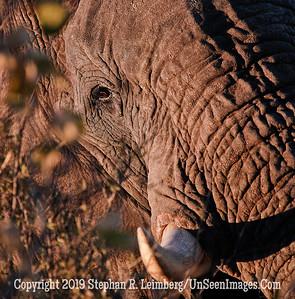 Elephant Puzzel_U0U0066 web