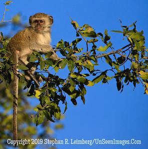 Baby Monkey_U0U0165 web