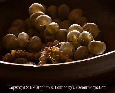 Grapes_MG_6144 x WEB