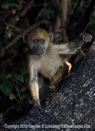 Monkey in Triangle_MG_6287 web