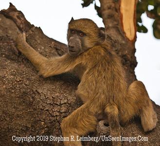 Monkey Climbing_U0U0240 web