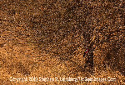 Tree With Red Bird_U0U0040 web