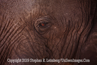 Elephant Eye_MG_6426 web