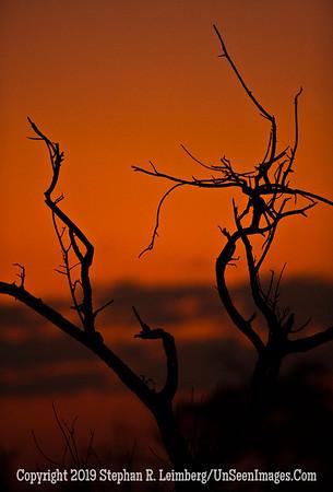Tree at Sunset_U0U0485 web