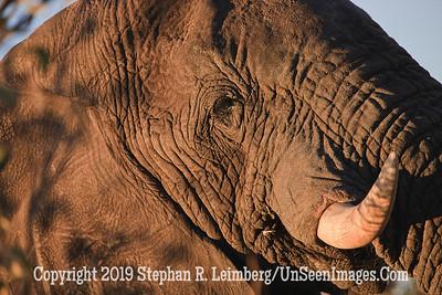 Elephant Side View_U0U0060 web