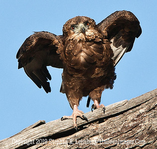 Eagle Owl 2_U0U0128 web