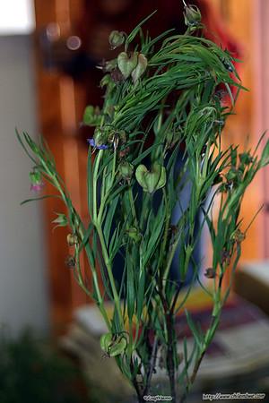 Plant specimens at the Botswana Botanical garden and herbarium.