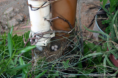 Bird nest on Mom and dads front porch