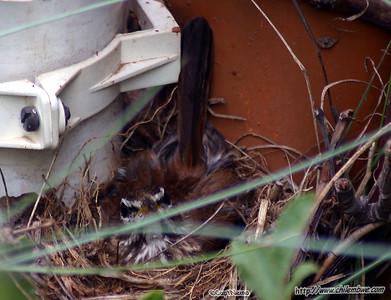 bird on its nest