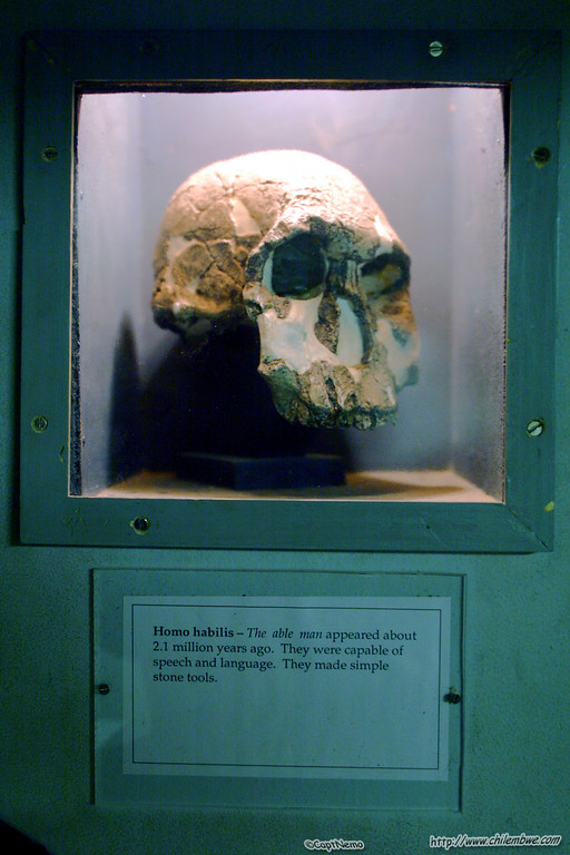 At the National Museum<br /> -<br /> Homo Habilis from 2.1 million years ago!