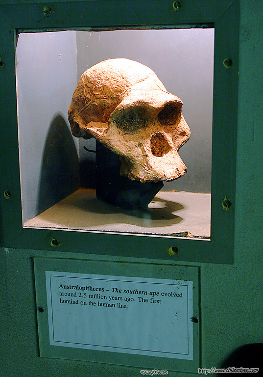 At the National Museum<br /> -<br /> Australopithecus from 2.5 million years ago!!