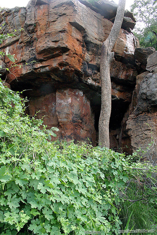 Small cave on hill top with nearby baboons.