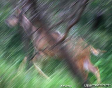 kudu at Mokolodi Game preserve, near Gaborone, Botswana