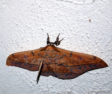 Moth on the wall at Mom and Dad's house.