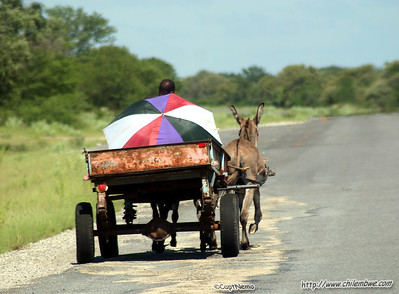 Donkey cart, almost as common as loose donkeys in the road(almost)